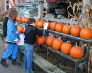 The Last Pumpkins in Town